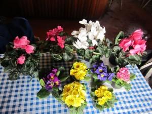 Bilban je prinesel pomlad :-)