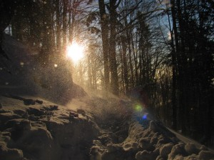 Sneg ob koncu januarja