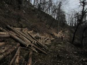 Ogroooomno lesa